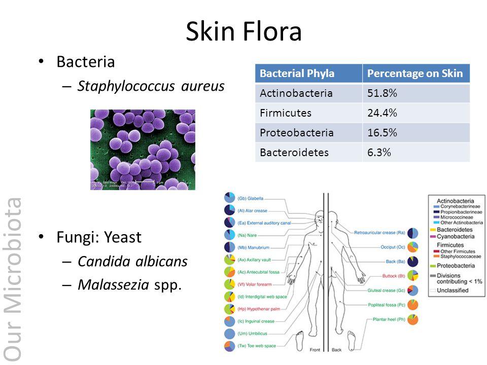 normal flora of skin pdf