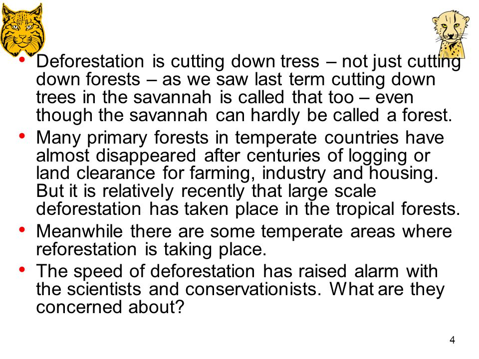 Cause and effect of deforestation essay