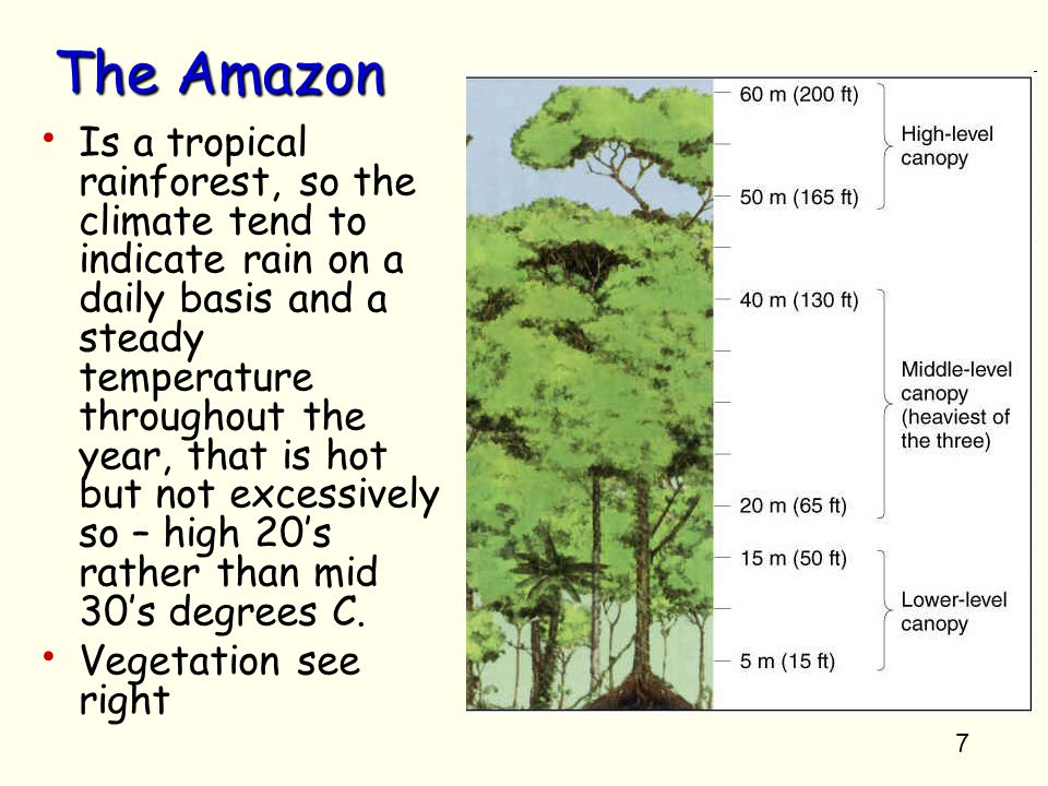 the cause and effect of deforestation in tropical rainforests Deforestation is a particular concern in tropical rainforests because these causes a forest in sumatra rainforests—some of the forests most vulnerable to.