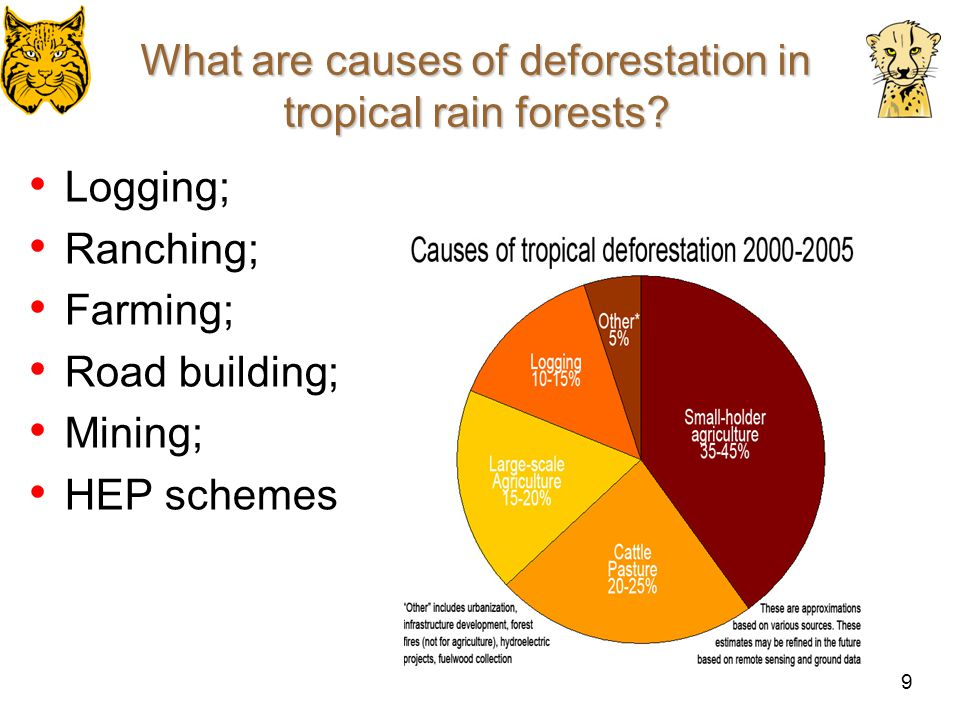 Deforestation: Cause and Effect