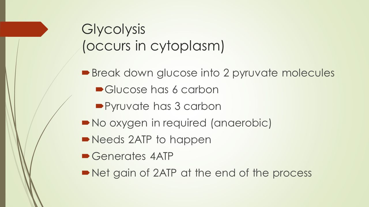 Glycolysis Occurs