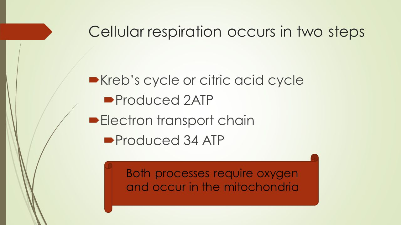 Cellular Respiration And Fermentation  Ppt Video Online. Is Abortion Illegal In The Us. Upcoming Technology Conferences. Carter Blood Care Plano American Rv Insurance. Akuafoil Business Cards Henry Insurance Agency. Security Alarm Company Reviews. Strengths Perspective In Social Work Practice. Graphic Design Photoshop Medigap Plans Oregon. Oil And Gas Investor Magazine