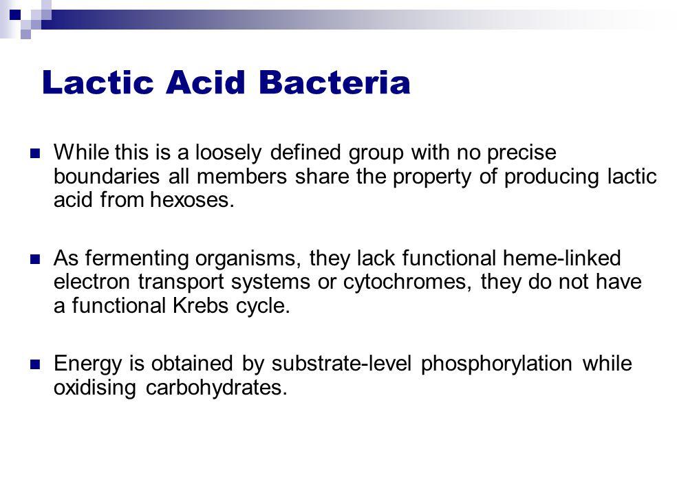 lactic acid bacteria in fermented food
