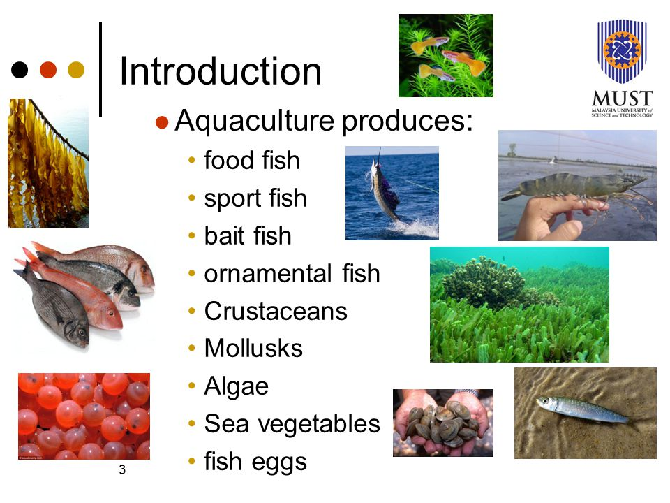 Aquaculture microbiology i ppt video online download for Ornamental pond fish types
