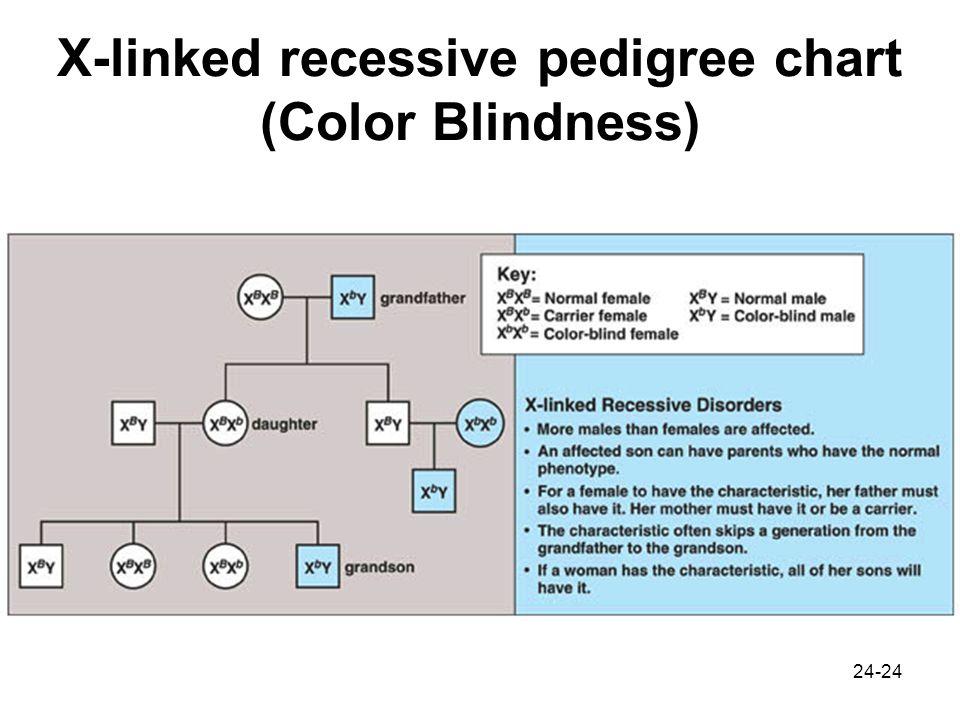 Pedigree Chart For Color Blindness Rebellions