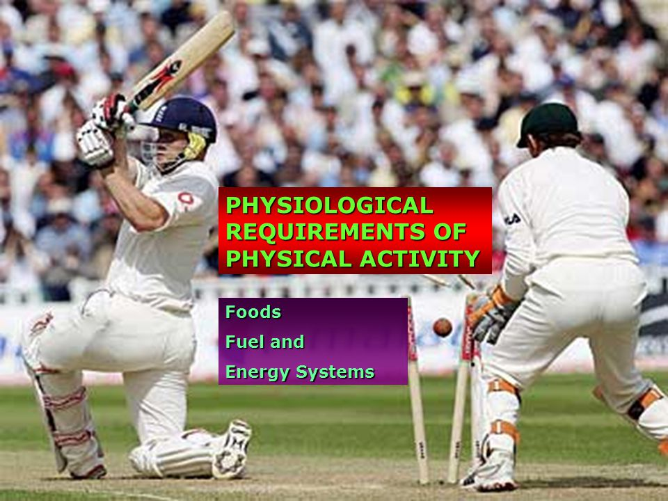 physiology of physical activity Why study physiology of physical activity exercise physiology: the study of the acute and chronic responses of the body to movement: short-term changes in how the.