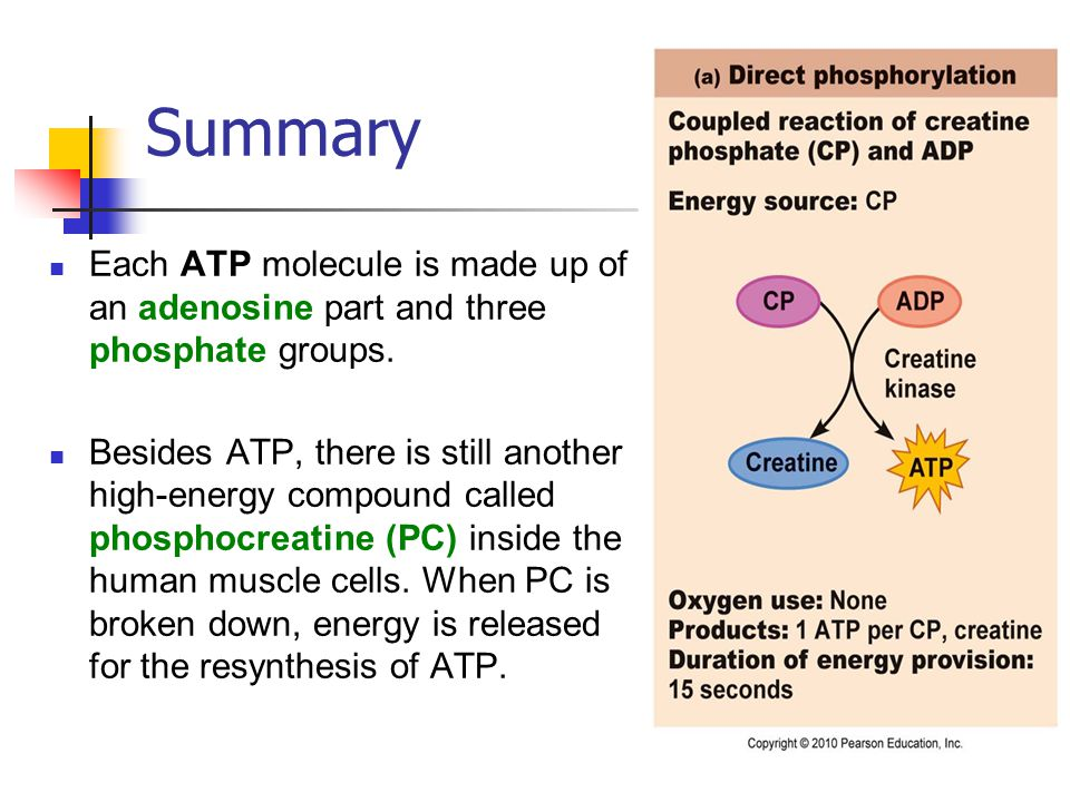 phosphocreatine resynthesis Adenosine triphosphate (atp) 13 resynthesis of atp from phosphocreatine in scenarios where activity is sustained for a few seconds.