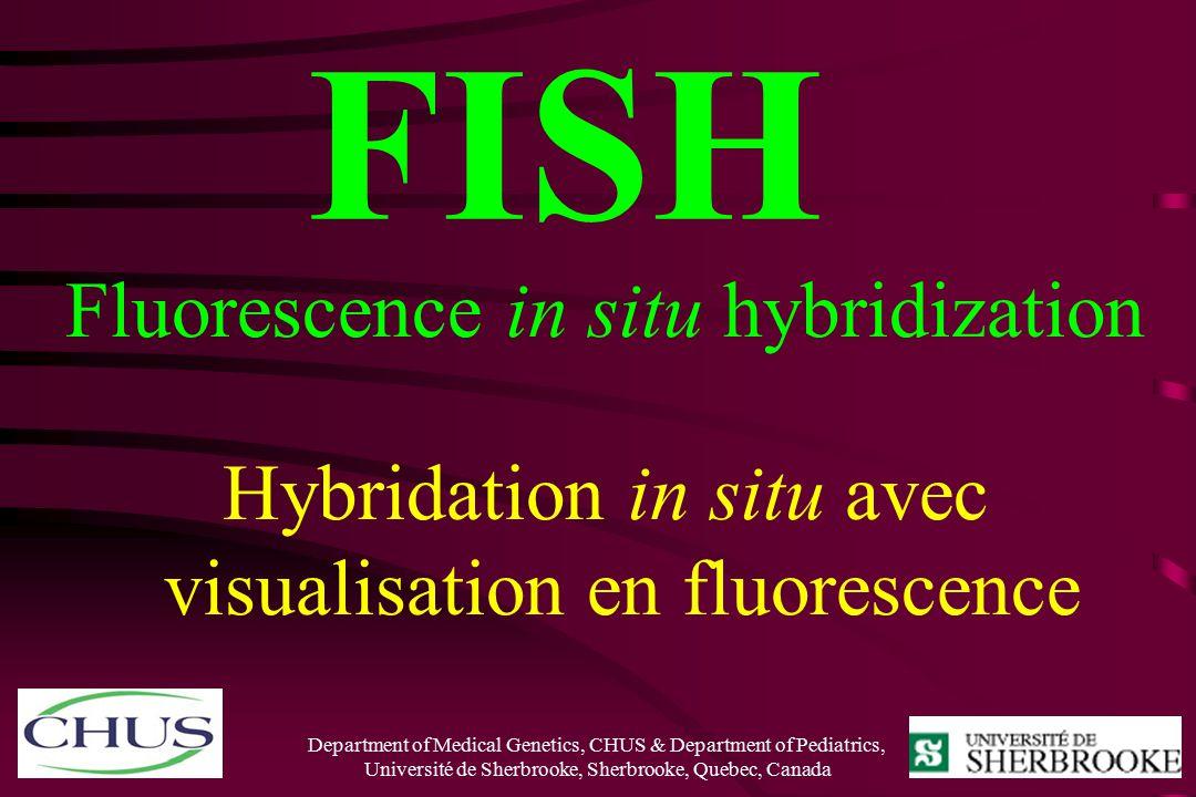 R gen drouin geneticist ppt video online download for Fish fluorescent in situ hybridization
