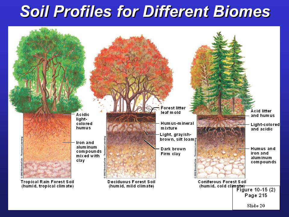 Geology processes hazards and soils ppt video online for Why are soils different