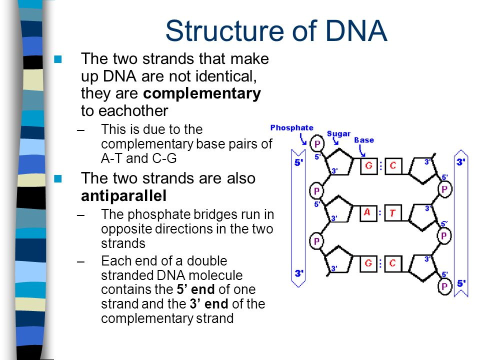 how to write a complementary strand of mrna