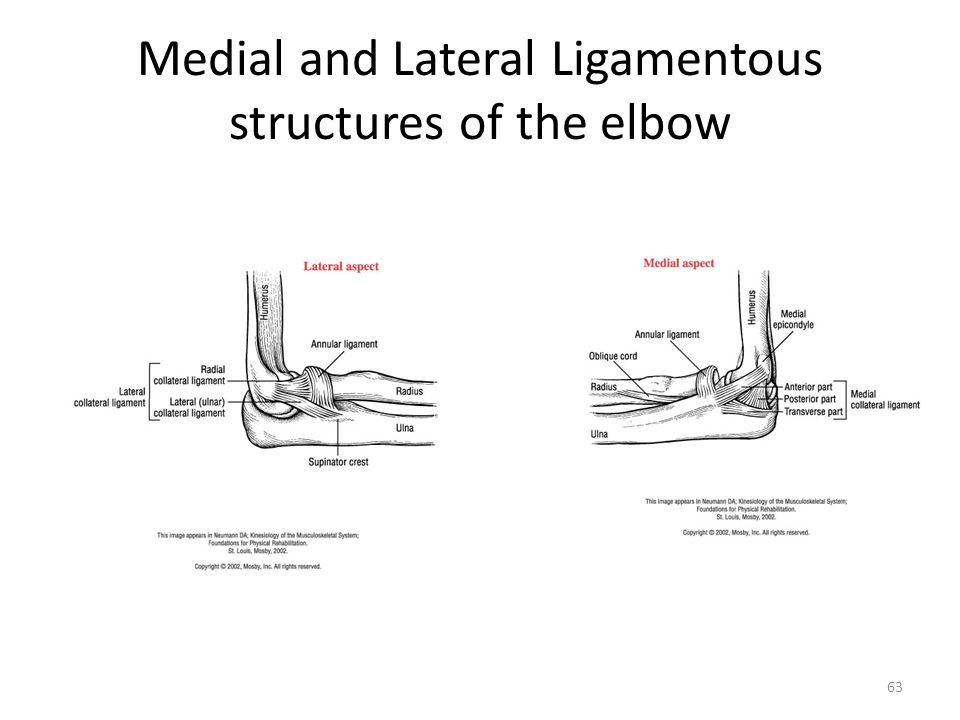 Medial and Lateral Ligamentous structures of the elbow