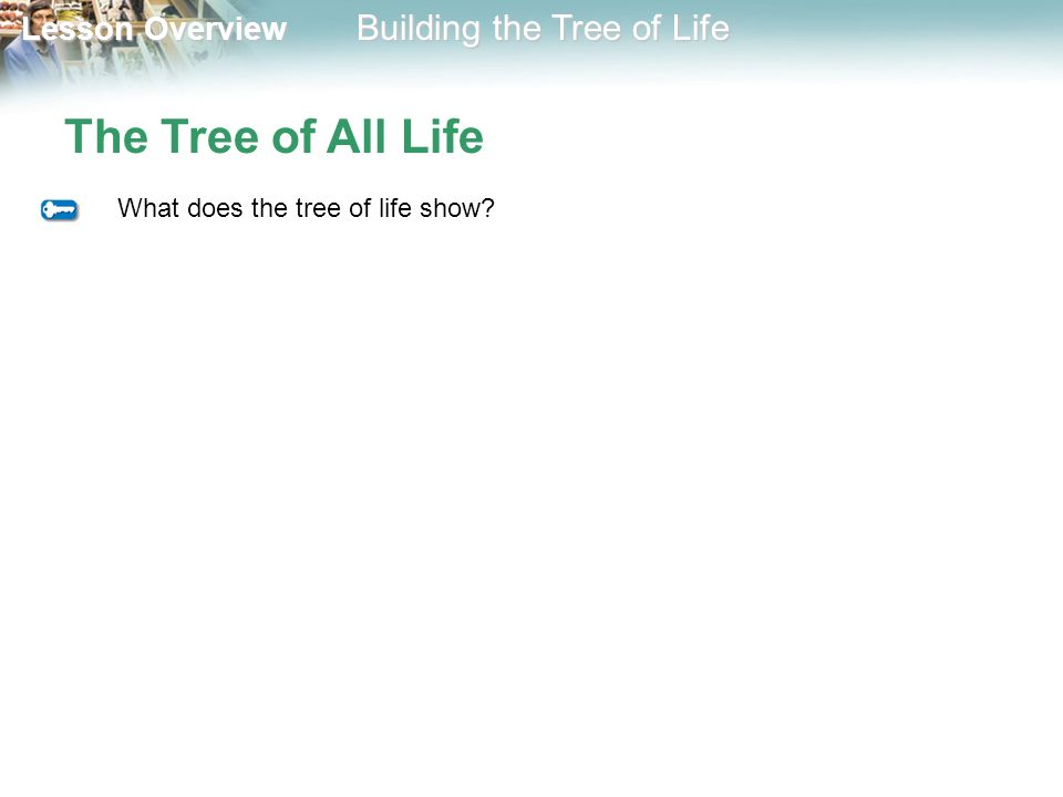 The Tree of All Life What does the tree of life show