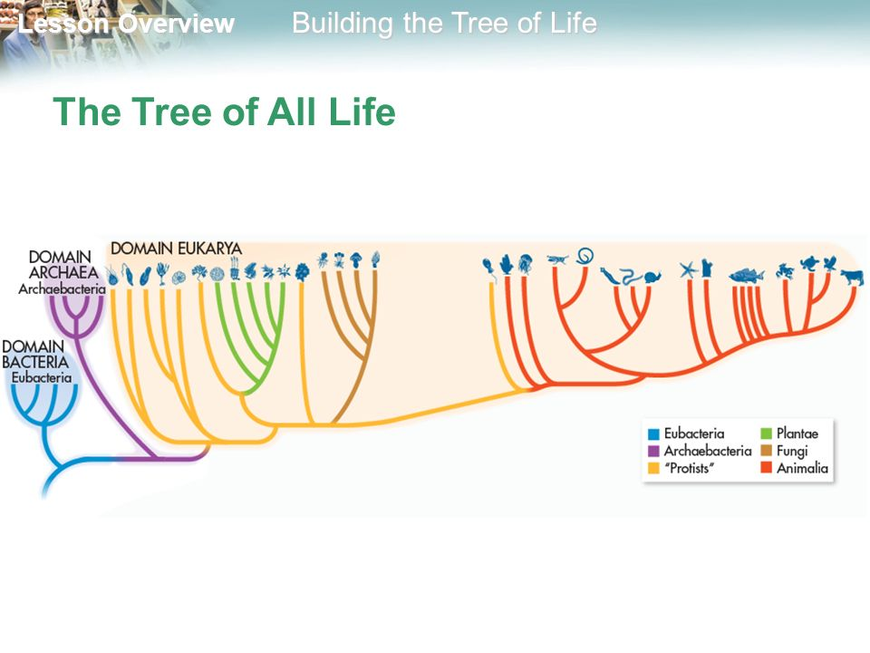 The Tree of All Life
