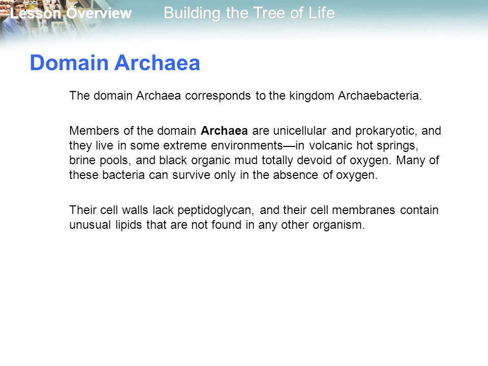 Domain Archaea The domain Archaea corresponds to the kingdom Archaebacteria.