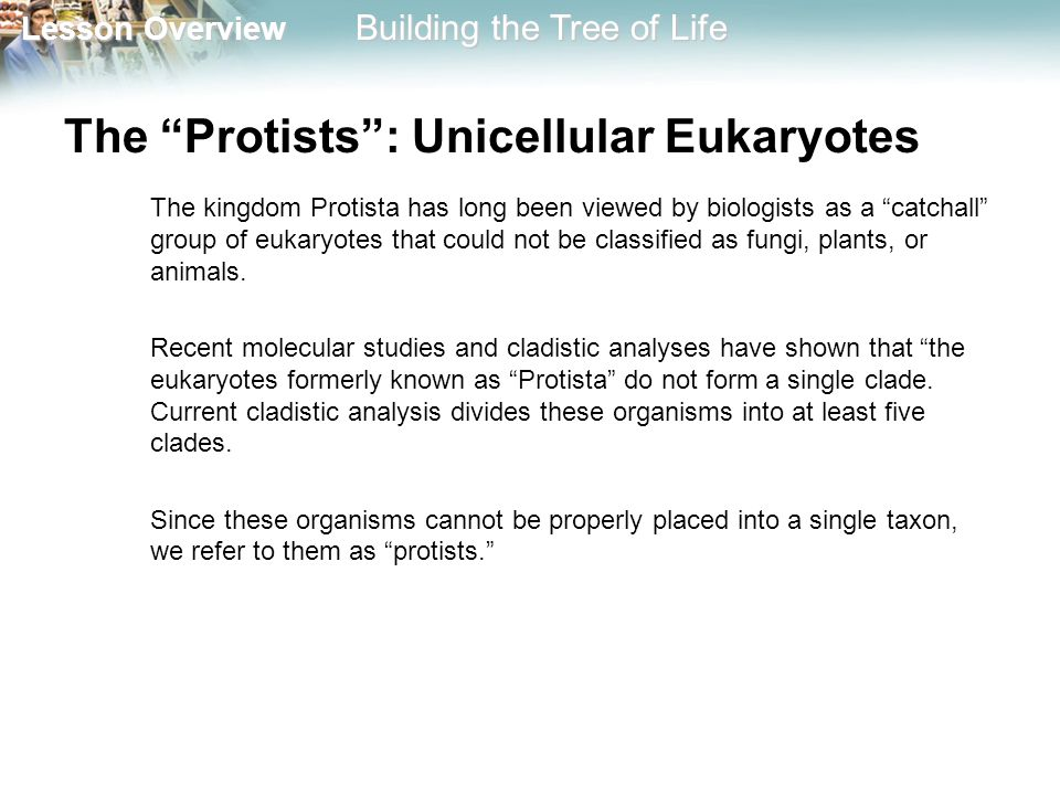 The Protists : Unicellular Eukaryotes
