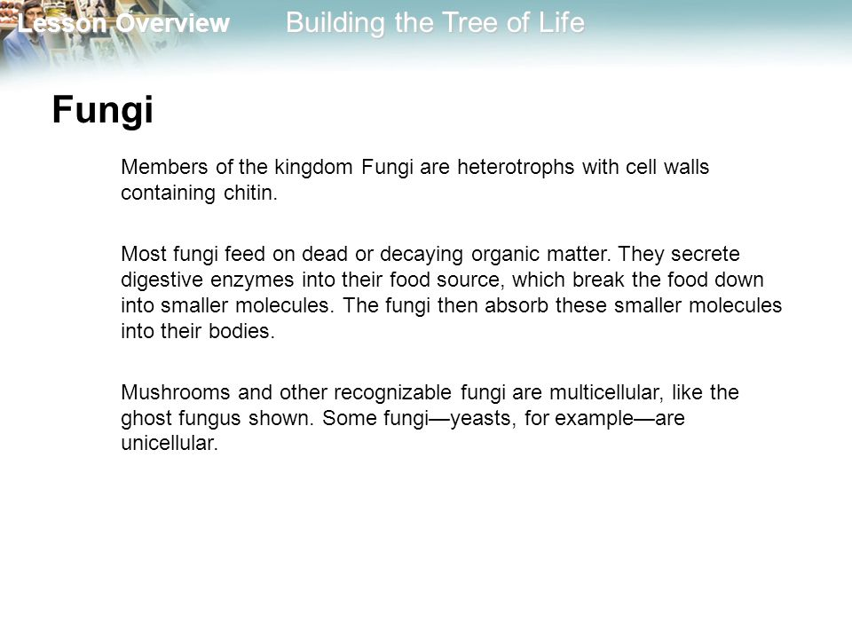 Fungi Members of the kingdom Fungi are heterotrophs with cell walls containing chitin.