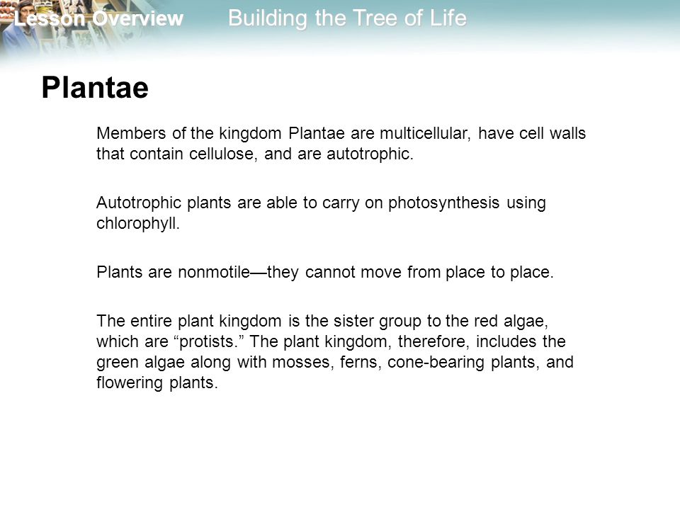 Plantae Members of the kingdom Plantae are multicellular, have cell walls that contain cellulose, and are autotrophic.