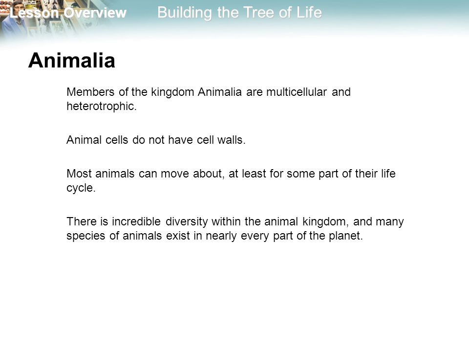 Animalia Members of the kingdom Animalia are multicellular and heterotrophic. Animal cells do not have cell walls.