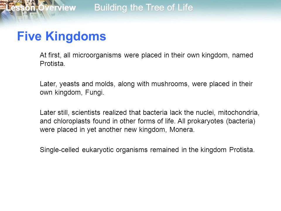 Five Kingdoms At first, all microorganisms were placed in their own kingdom, named Protista.