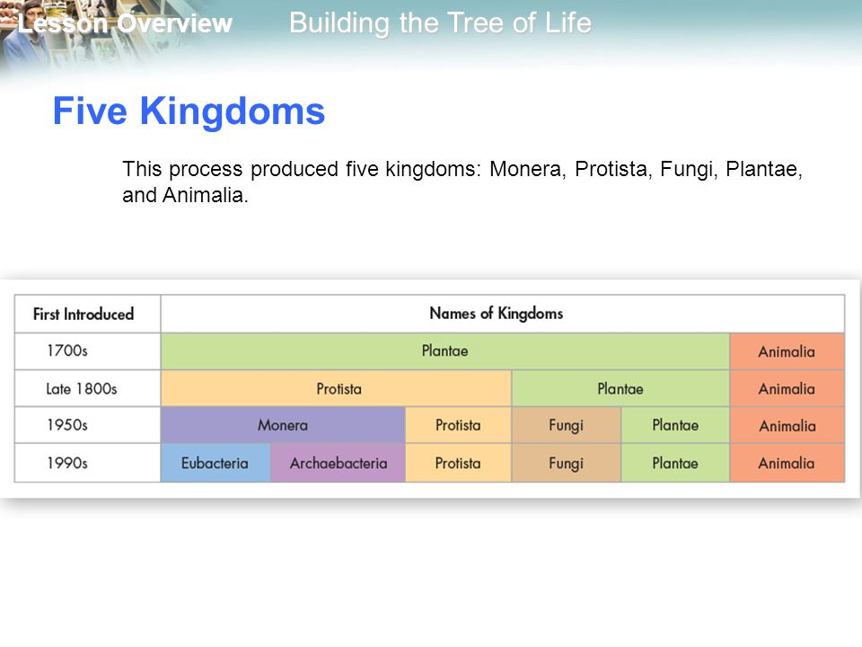 Five Kingdoms This process produced five kingdoms: Monera, Protista, Fungi, Plantae, and Animalia.