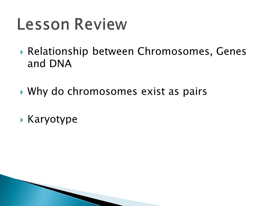 relationship between chromosomes genes dna and alleles