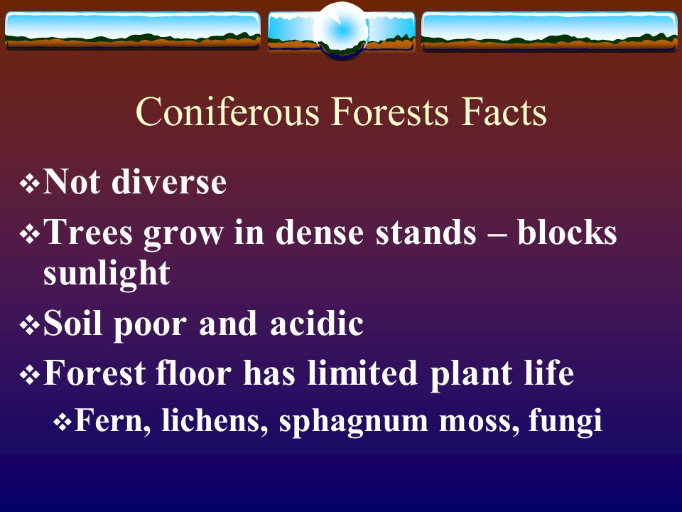 Forest Biomes Chapter Ppt Download