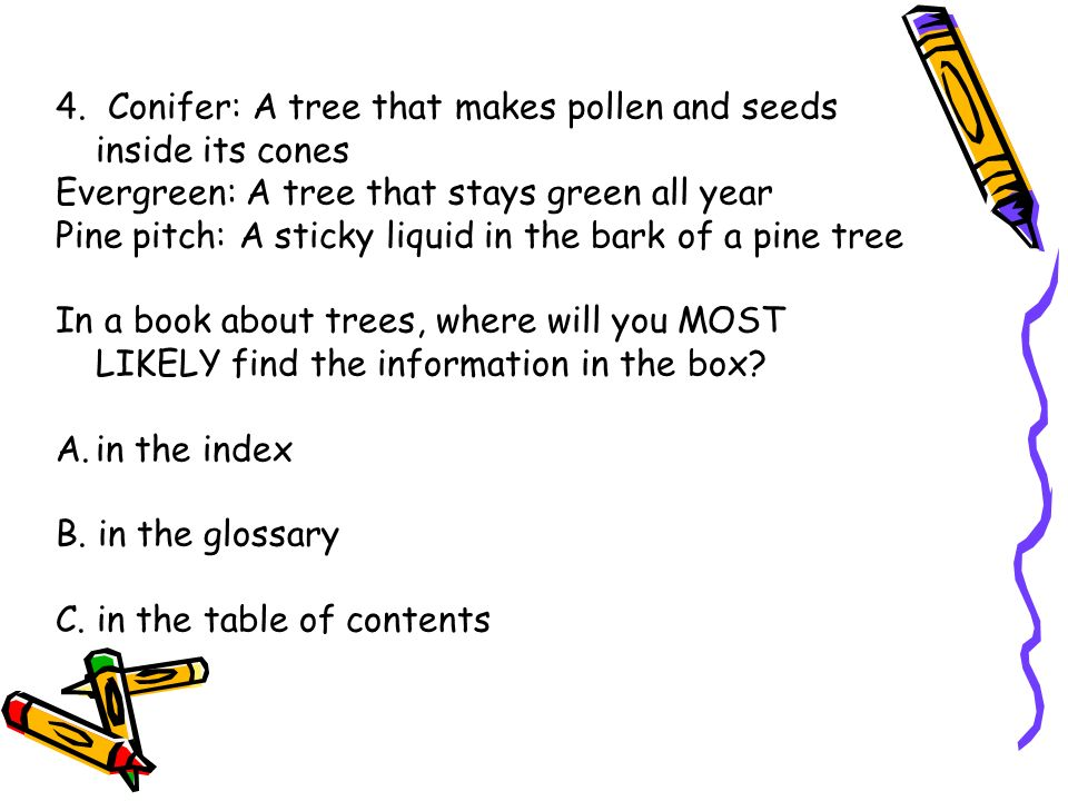 4. Conifer: A tree that makes pollen and seeds inside its cones
