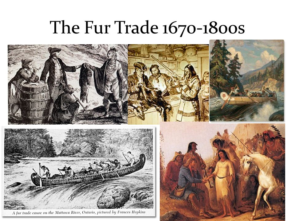 The Fur Trade s  - ppt video online download