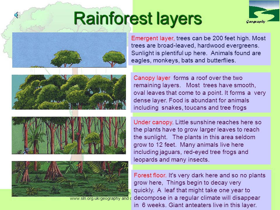 Rainforest layers  sc 1 st  SlidePlayer & Tropical rainforest structure LO: To understand the structure of ...