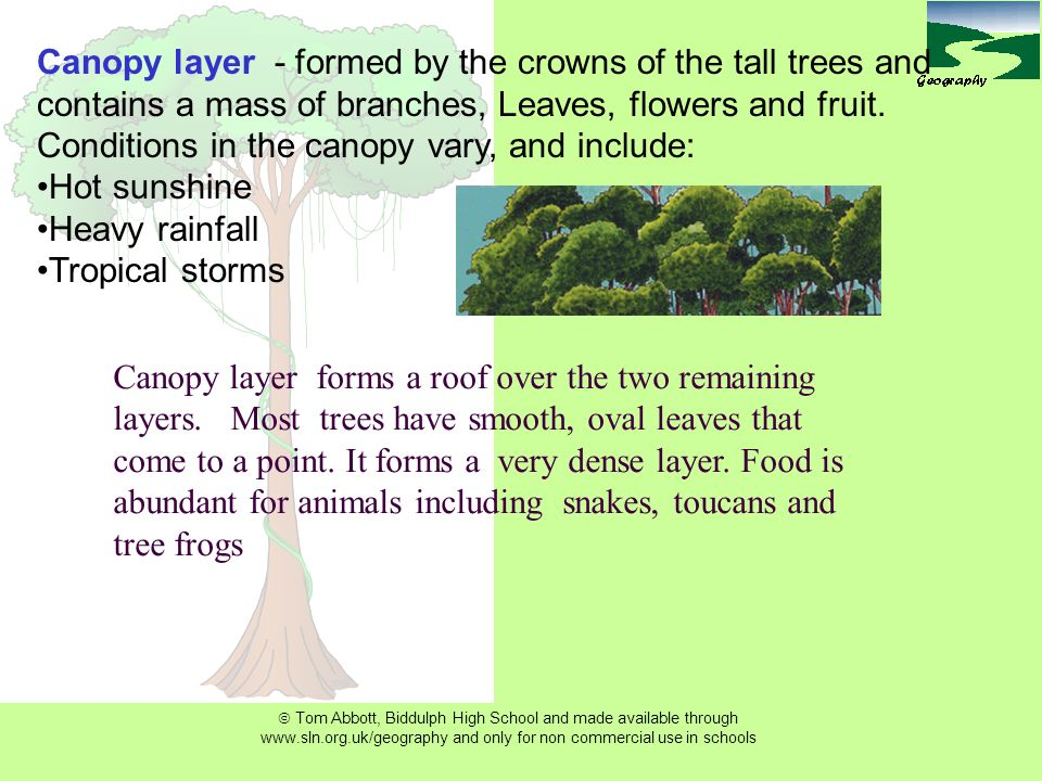 Tropical Rainforest Structure LO To Understand The Of