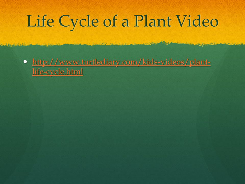 Life Cycle of a Plant Video