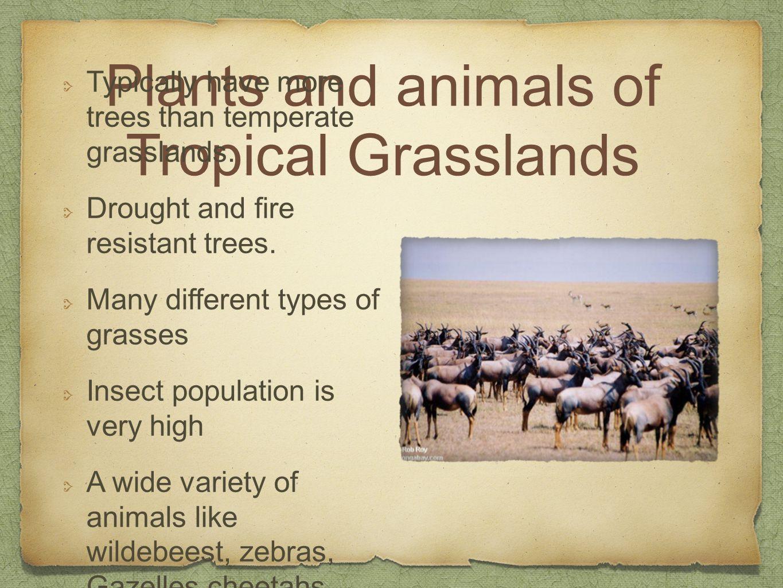 Tropical grassland animals