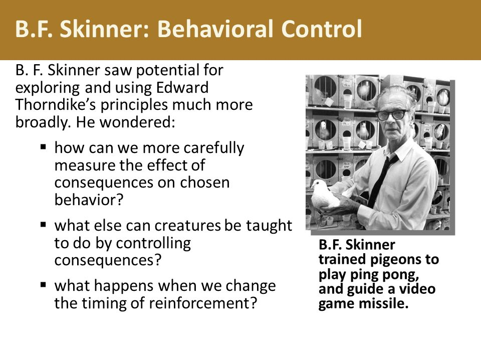 Skinner theory of education
