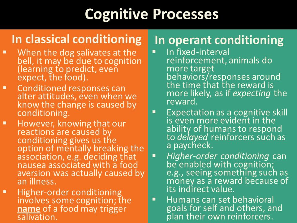 Everyday Examples of Operant Conditioning  Psychologized