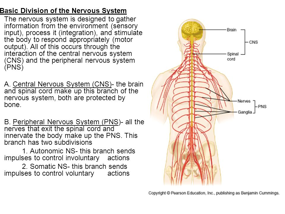 nervous system and mark Signs and symptoms of nervous system tumors a tumor is a mass of cells that grows over time and expands inside the brain this expansion causes two general types of symptoms: increased pressure inside the head (intracranial pressure) and disrupted brain function.