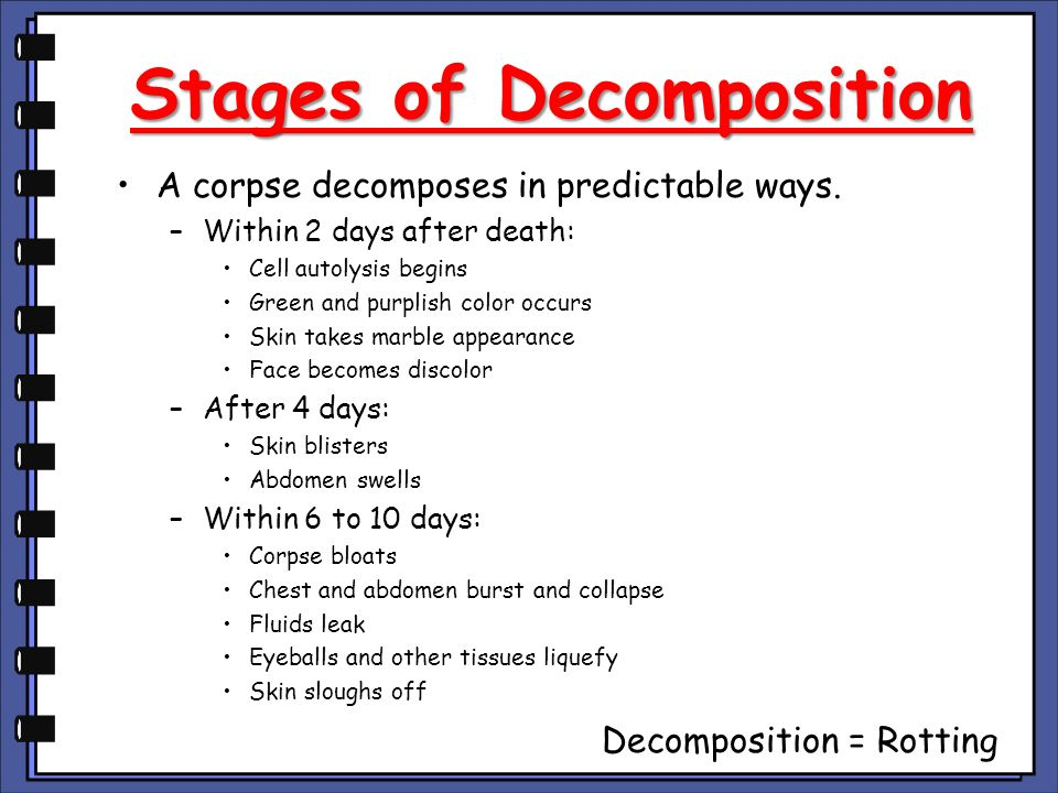 What Are the Four Stages of Human Decomposition?