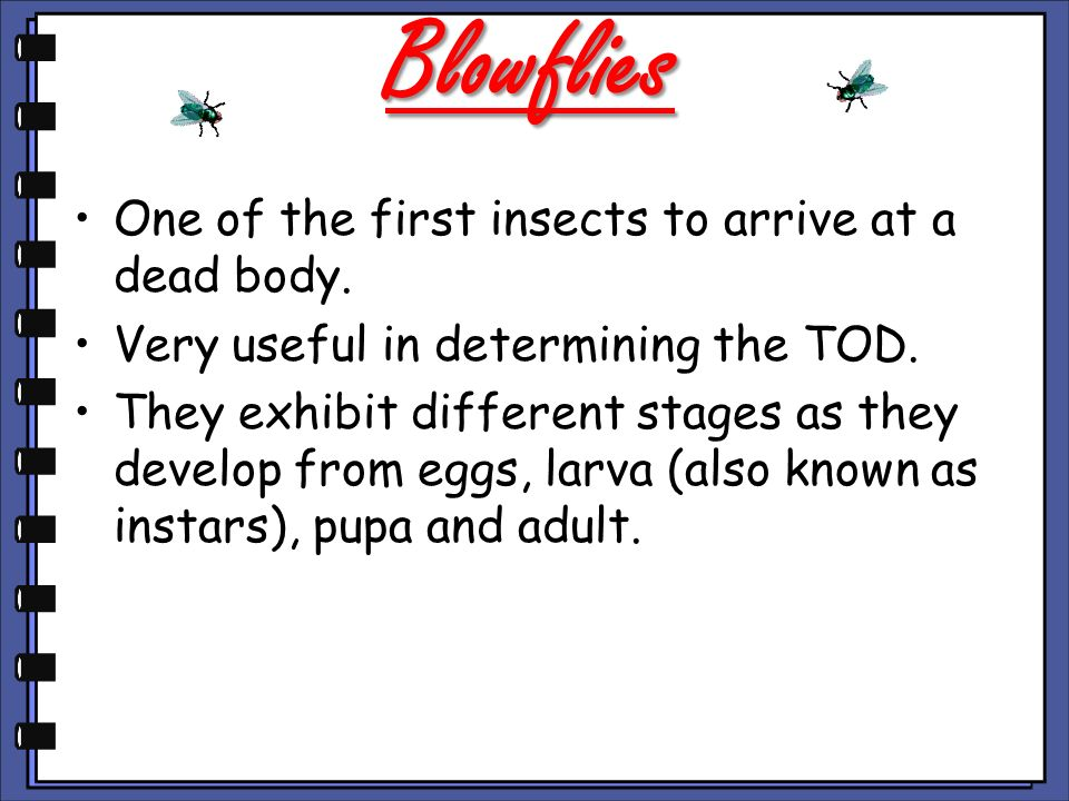 Blowflies One of the first insects to arrive at a dead body.