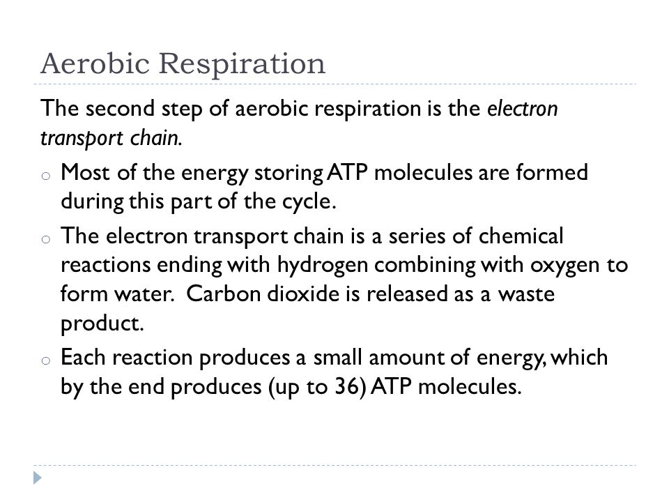 Aerobic Respiration The second step of aerobic respiration is the electron transport chain.