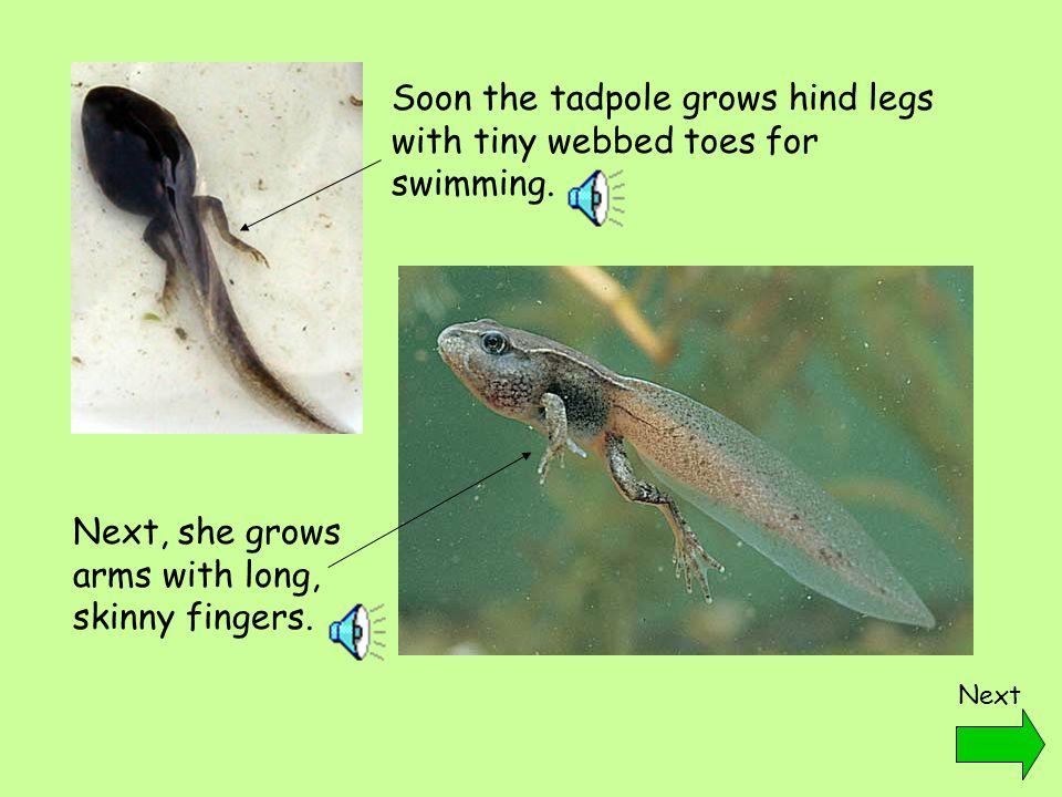 Tadpole to frog timeline