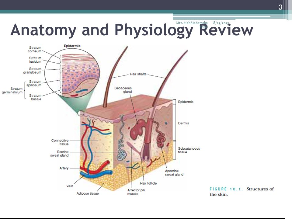 Assessing the Integumentary System - ppt video online download