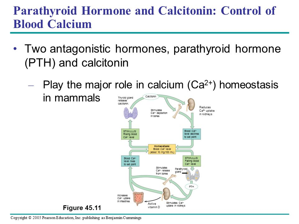 calcium homeostasis and hormonal regulation In this regard, the principal role of vitamin d is to regulate calcium  which are  regulated by 1,25-dihydroxyvitamin d3, the hormonal form of.