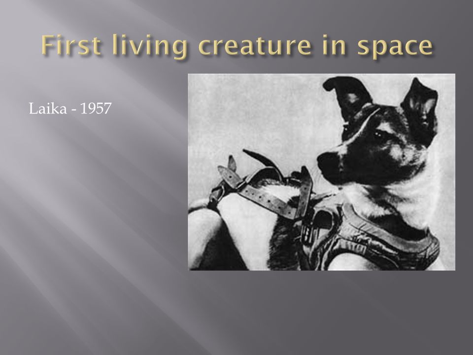First living creature in space