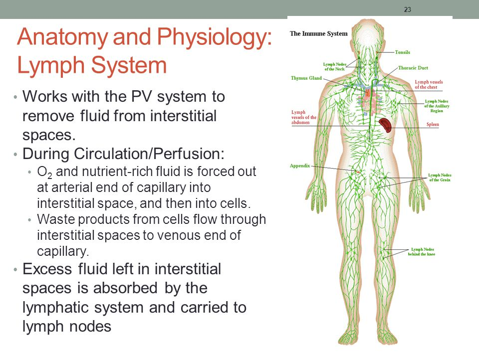 Lymphatic System A&P Chapter 15 Pg 461. Introduction ... Lymphatic ...