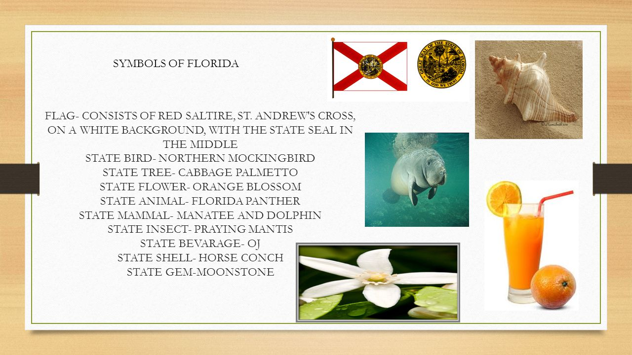 LEARN ALL ABOUT FLORIDA Ppt Video Online Download - Florida state bird and flower and tree