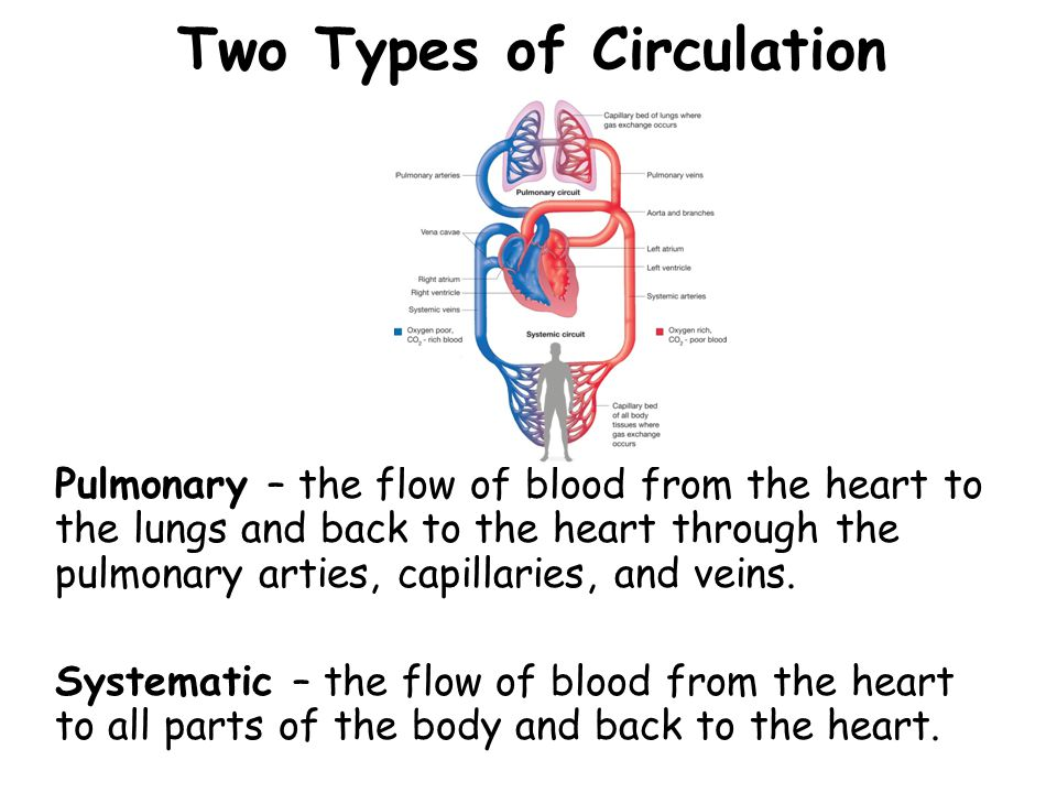 Two Types of Circulation