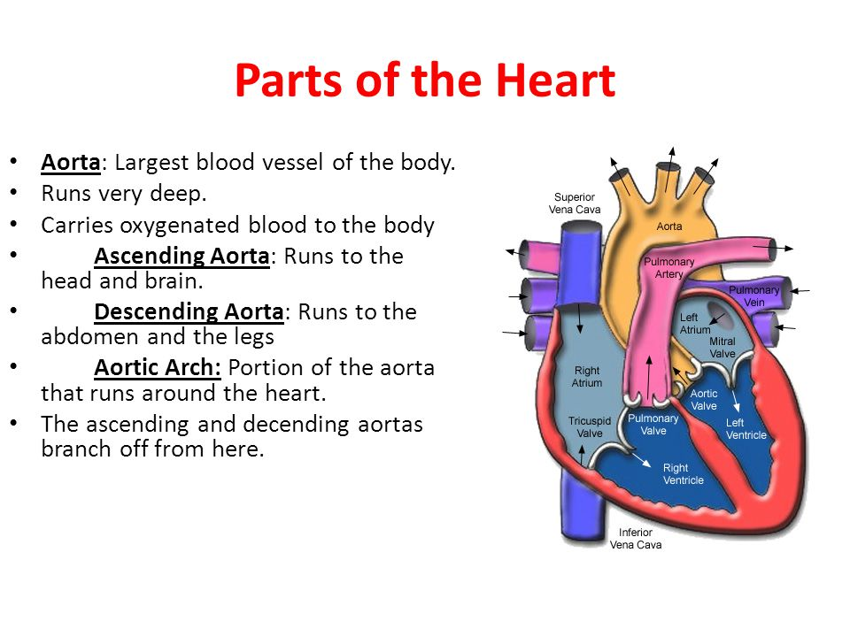 Where The Mind Is Biggest The Heart The Senses: Ppt Video Online Download
