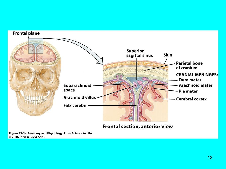 Erfreut Gesichtsnerv Anatomie Ppt Bilder - Anatomie Ideen - finotti.info