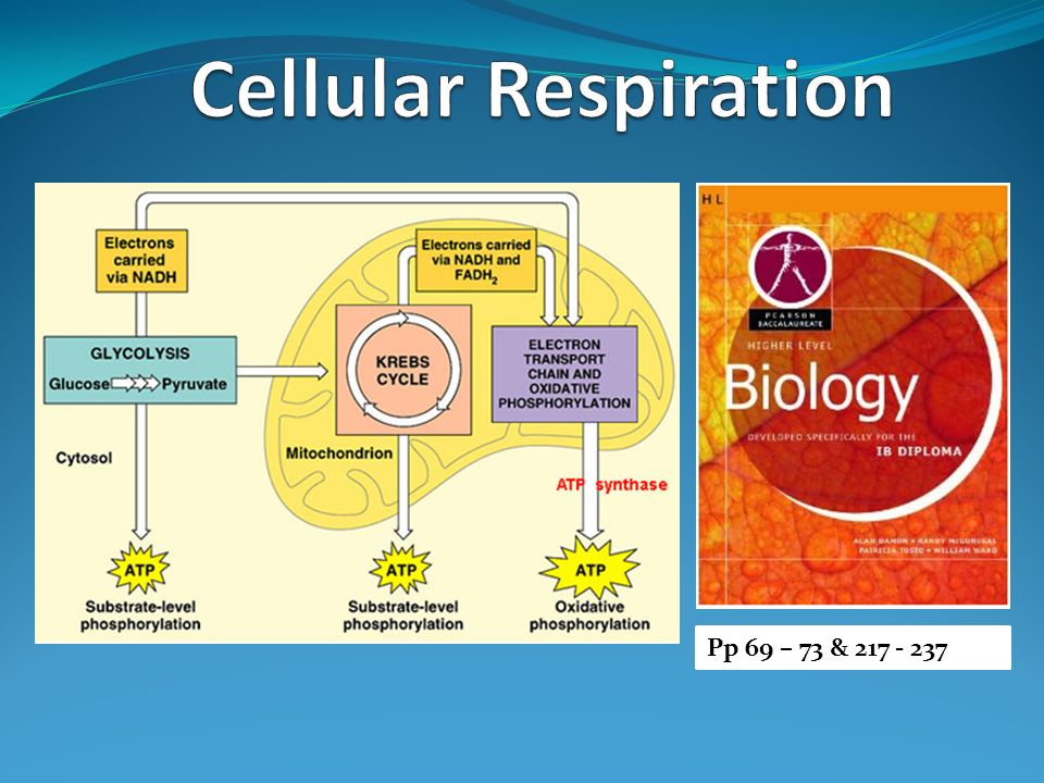 Cellular Respiration Pp 69  73 & Ppt Video Online Download. Online Education And Training. Best Rewards Credit Card Canada. Executive Flight Services Learning Embedded C. Roofing Contractors Boston Advantage It Tech. Kansas City Liposuction Orthodontics Braces. Seo Companies In Miami Casino Boat Johns Pass. Roof Shingle Replacement Loans Online Payday. Credit Cards For Companies Mac Need Antivirus