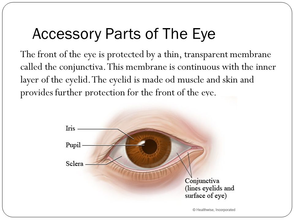 Communication Topic 3: The Human Eye - ppt video online ...