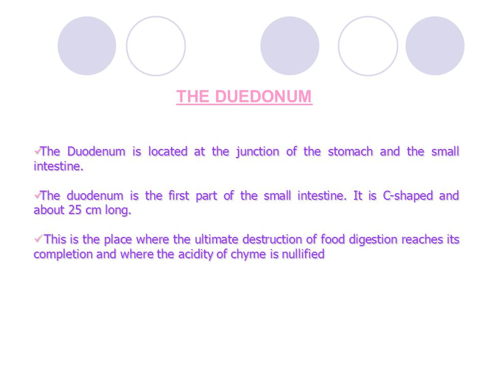 THE DUEDONUM The Duodenum is located at the junction of the stomach and the small intestine.